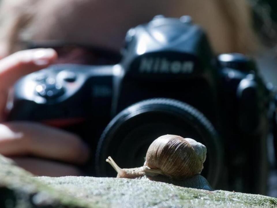Diese Schnecke entkommt dem Fotografen für ein Makrobild nicht