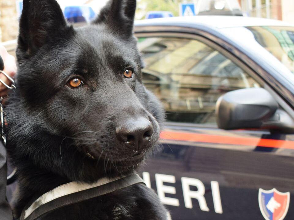 zeus drogenhund carabinieri