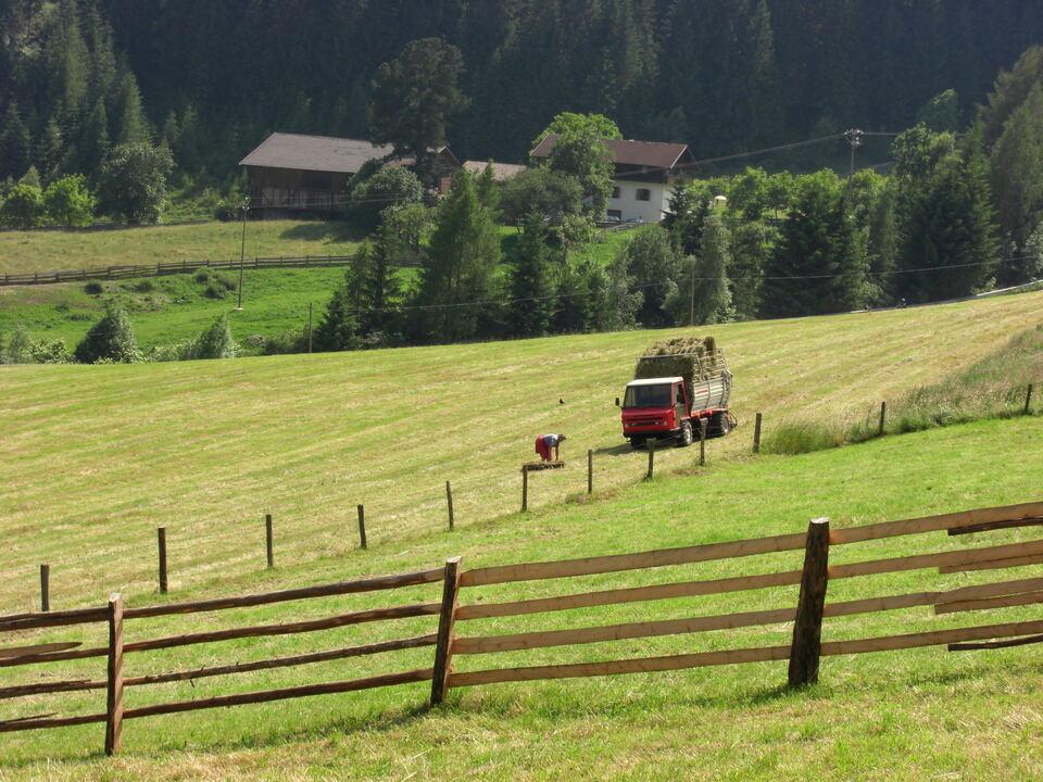 heuernte-sarnthein wiese landwirt bauer landwirtschaft heu