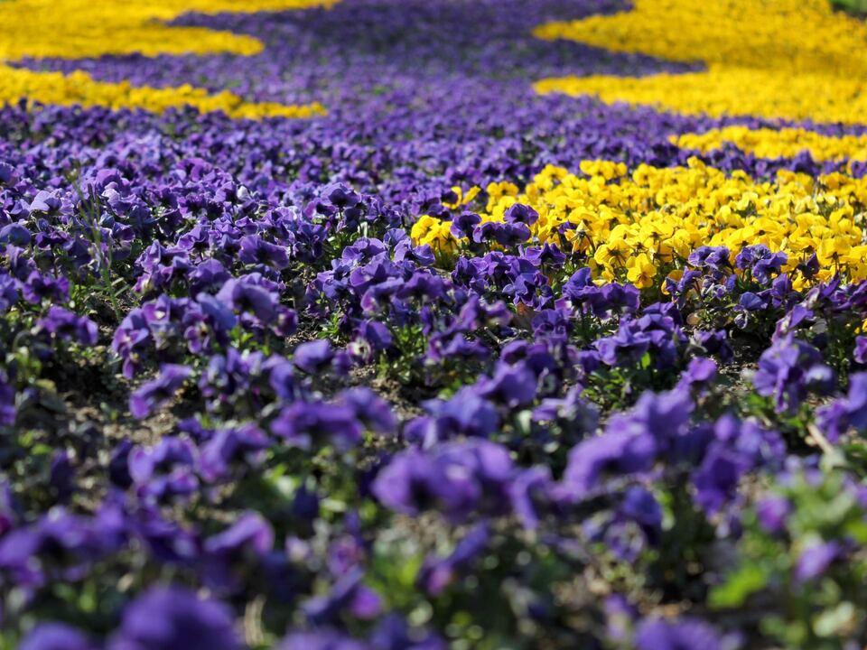 Blumen/Gärten von Schloss Trauttmannsdorff