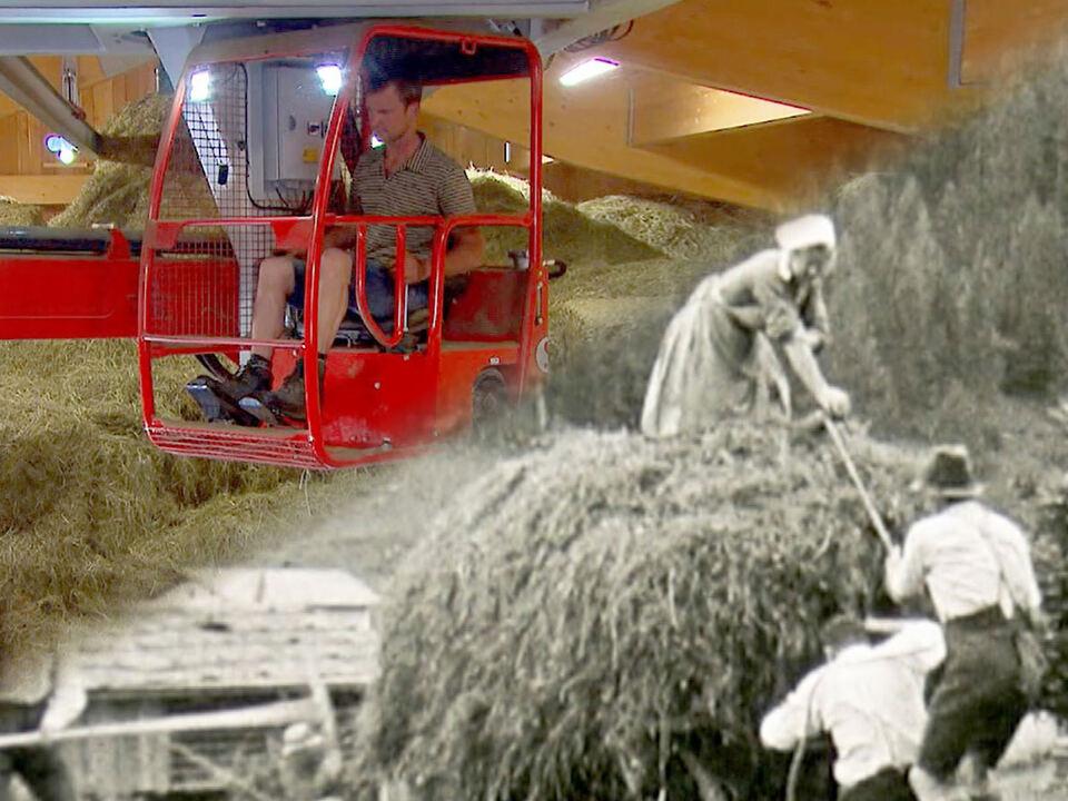 landwirtschaft wandel