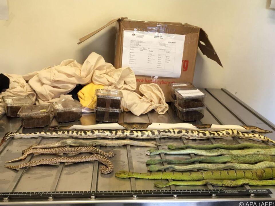 Ein Tierarzt musste alle Spinnen und Schlangen einschläfern