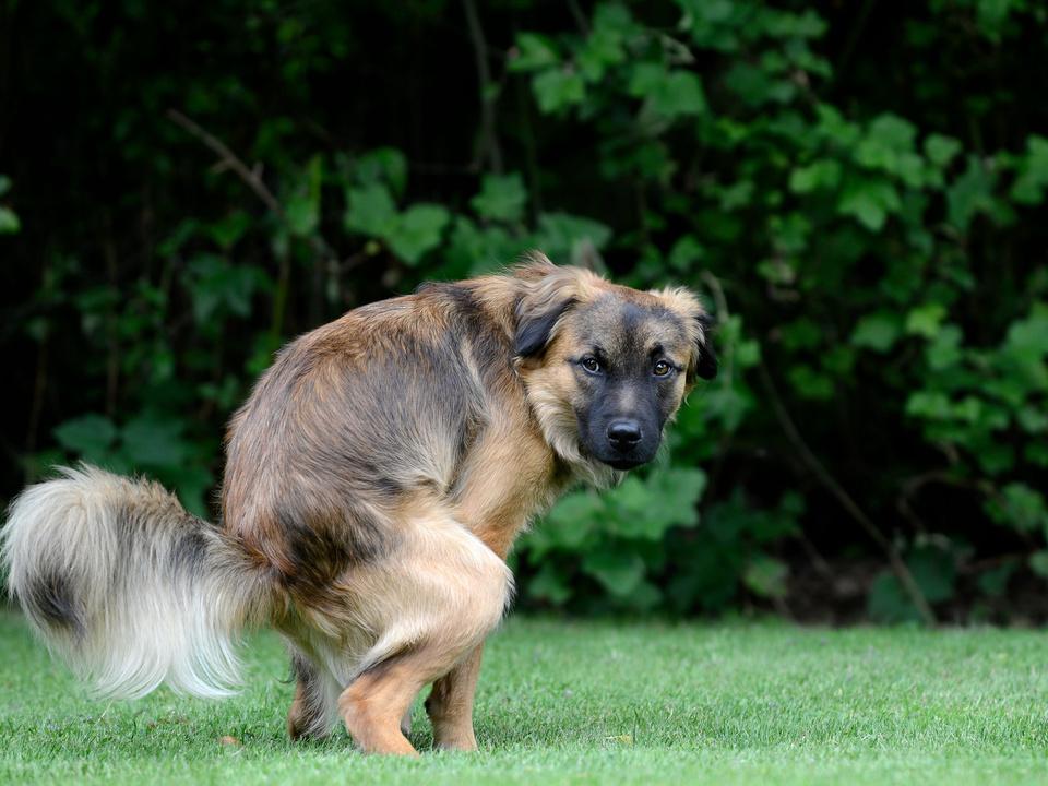 Hund hundekot häufchen scheiße