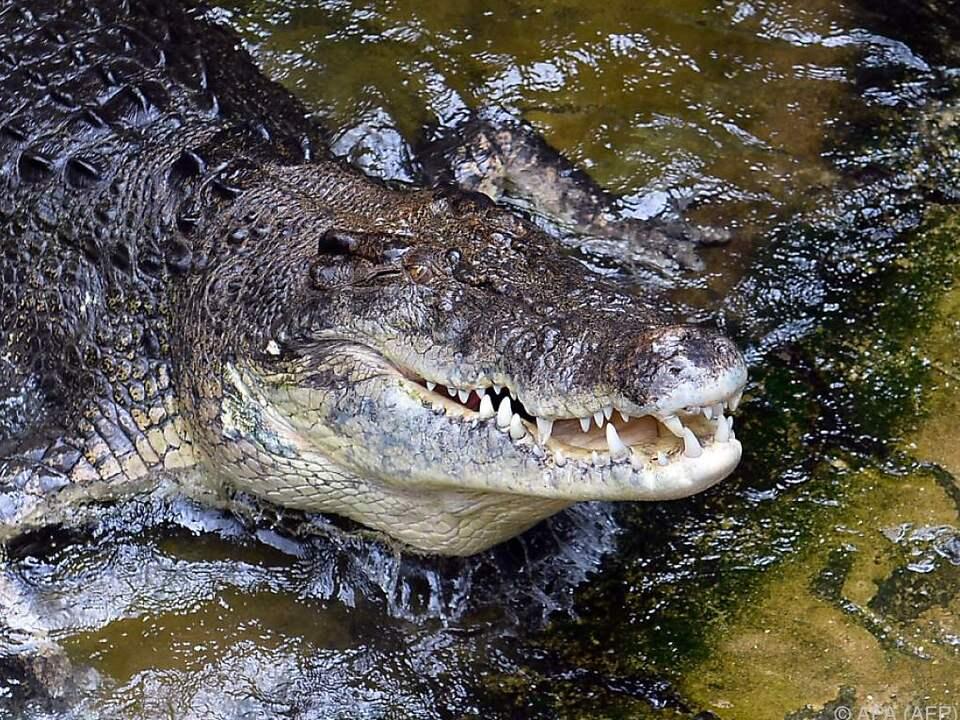 In Australien stehen Krokodile seit 1971 unter Schutz