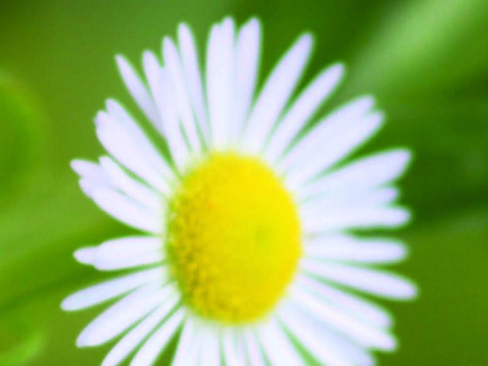 Blume Lesezeichen