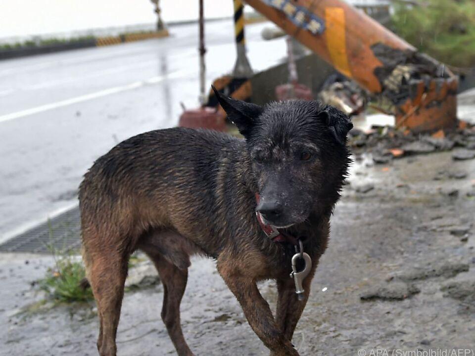Verstöße werden mit umgerechnet bis zu 7.700 Euro geahndet hund