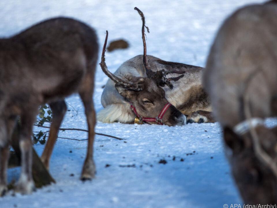 Bisher sind nur Tiere in Norwegen betroffen