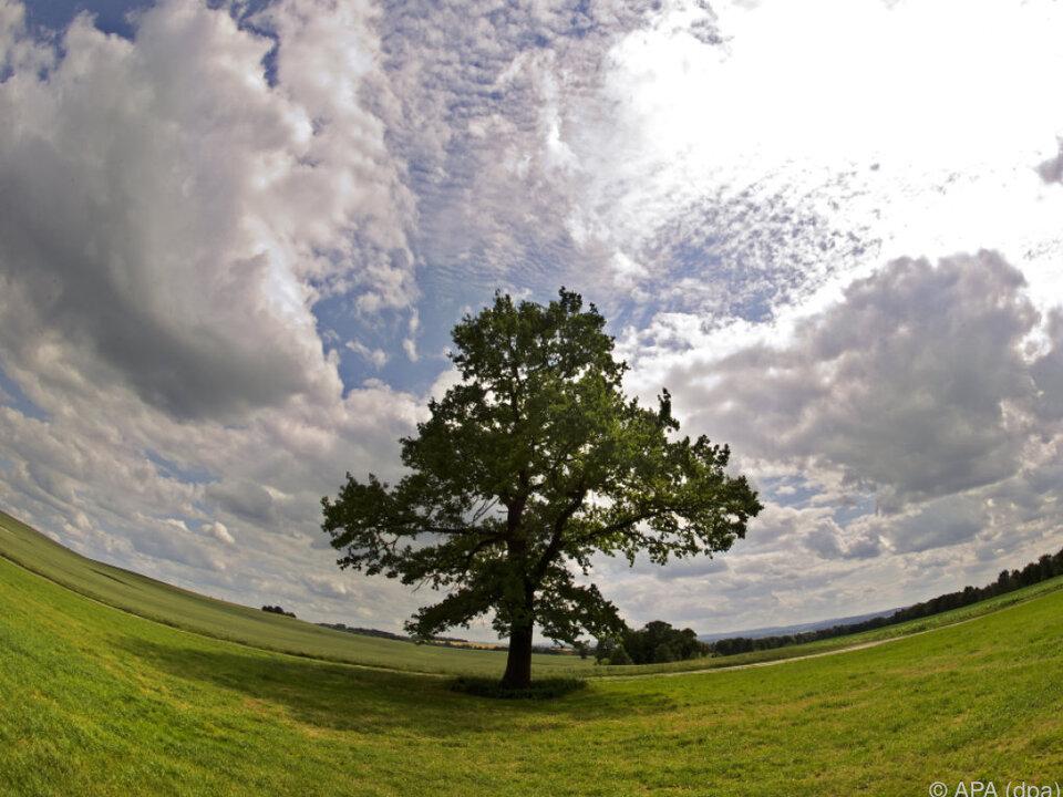 Sonne, Wolken, Regen - das alles wird es geben wetter baum umwelt