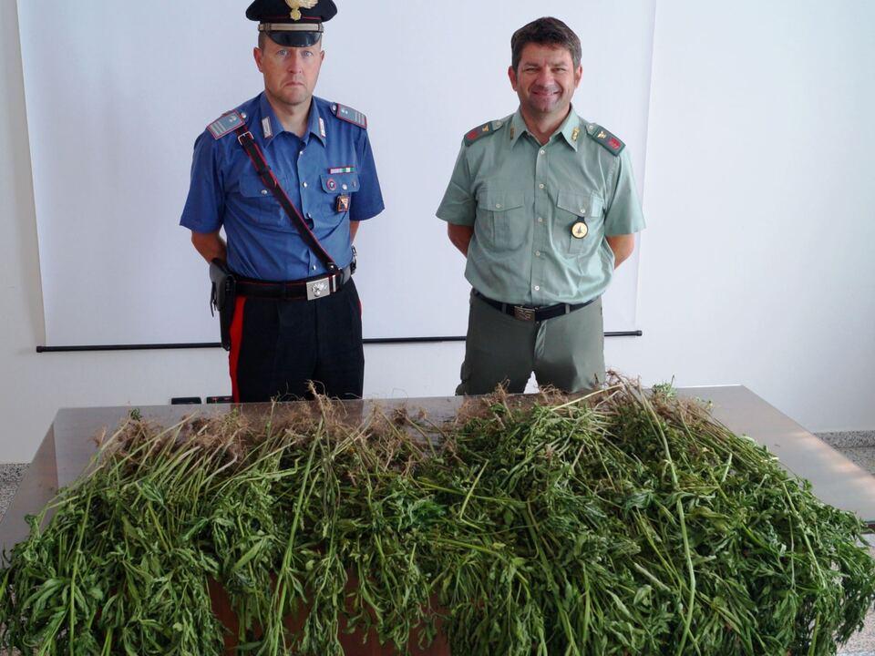 20170630-perca-brunicobolzano-sequestro-marijuana-di-carabinieri-e-forestali