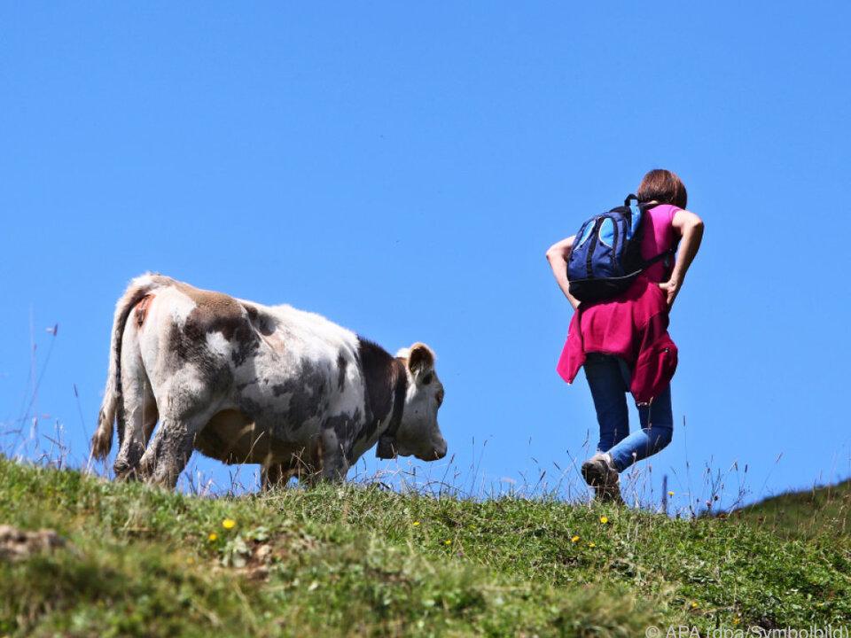 Bei Rindern hat der Schutz des Nachwuchses oberste Priorität