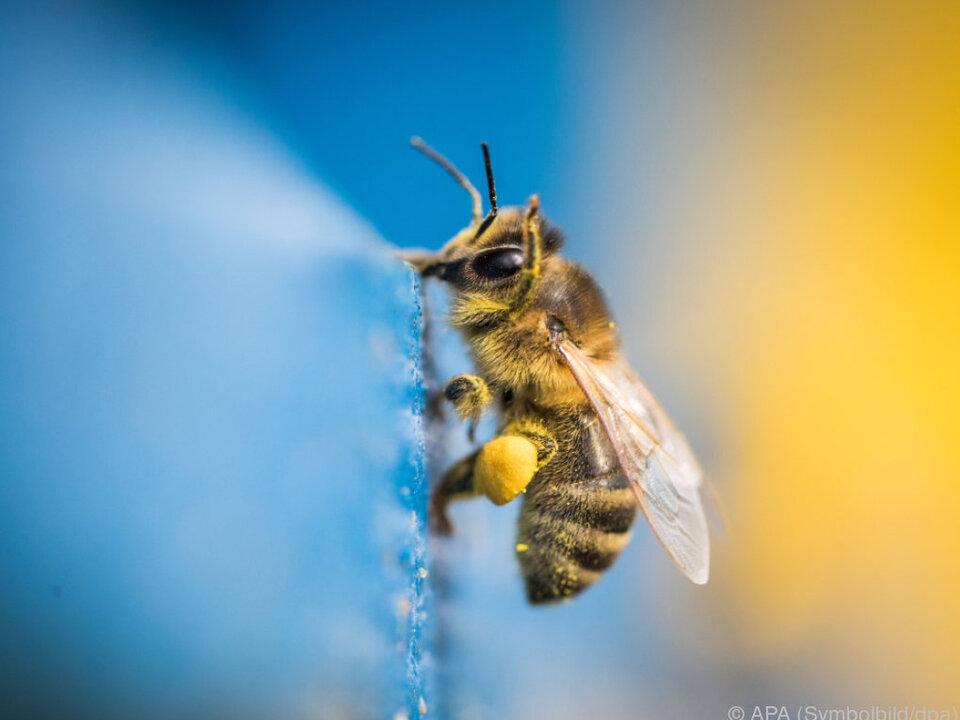 Bienen haben es nie leicht