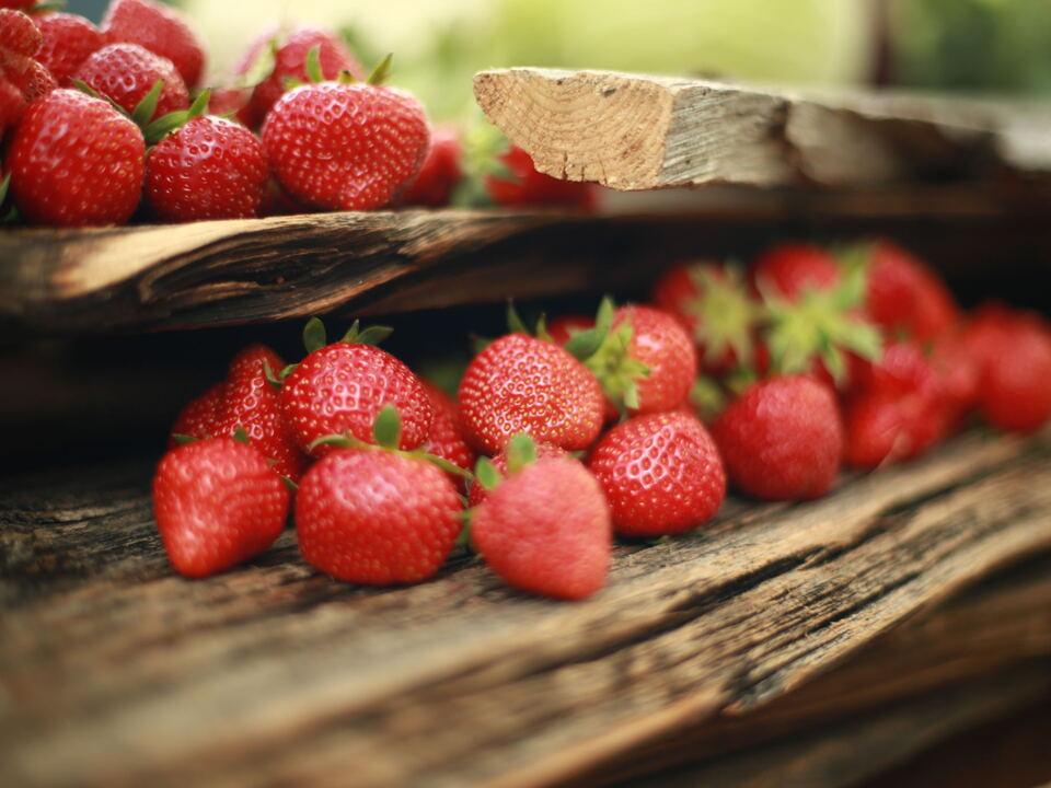 Erdbeeren Martell Vinschgau