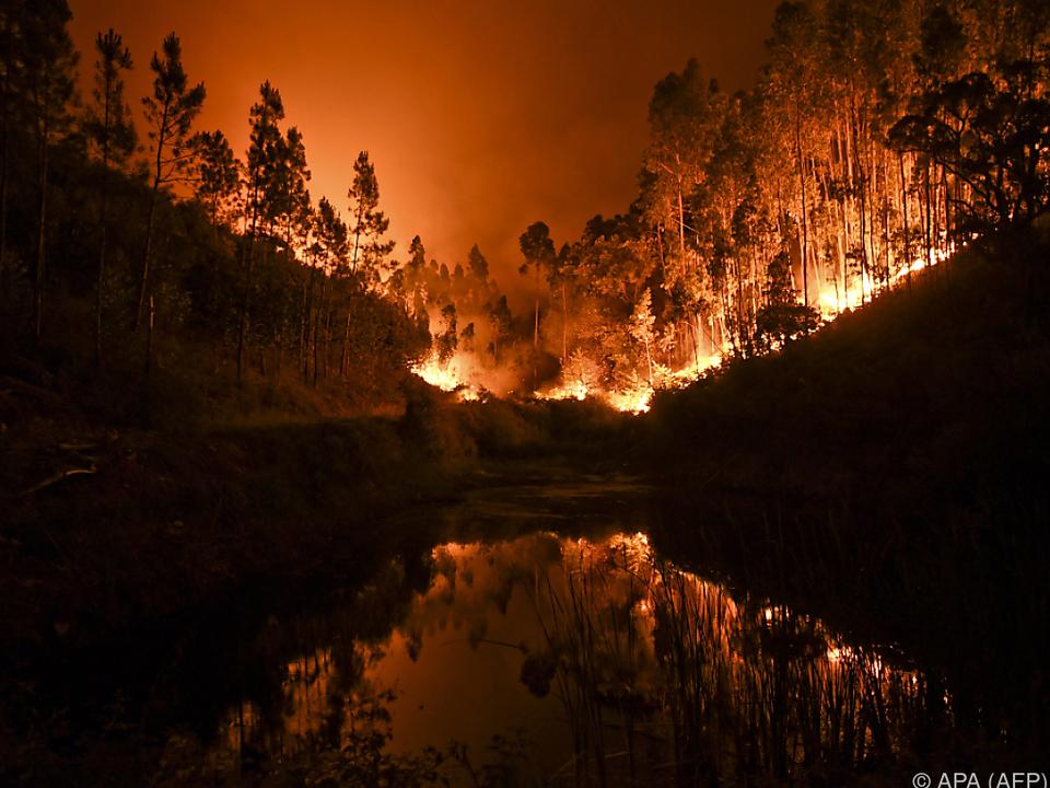 Feuer breitete sich rasend schnell aus waldbrand