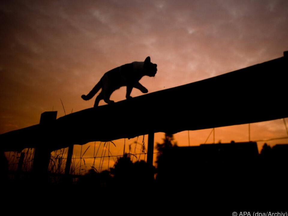 Vor allem wild lebende Katzen wurden tot aufgefunden
