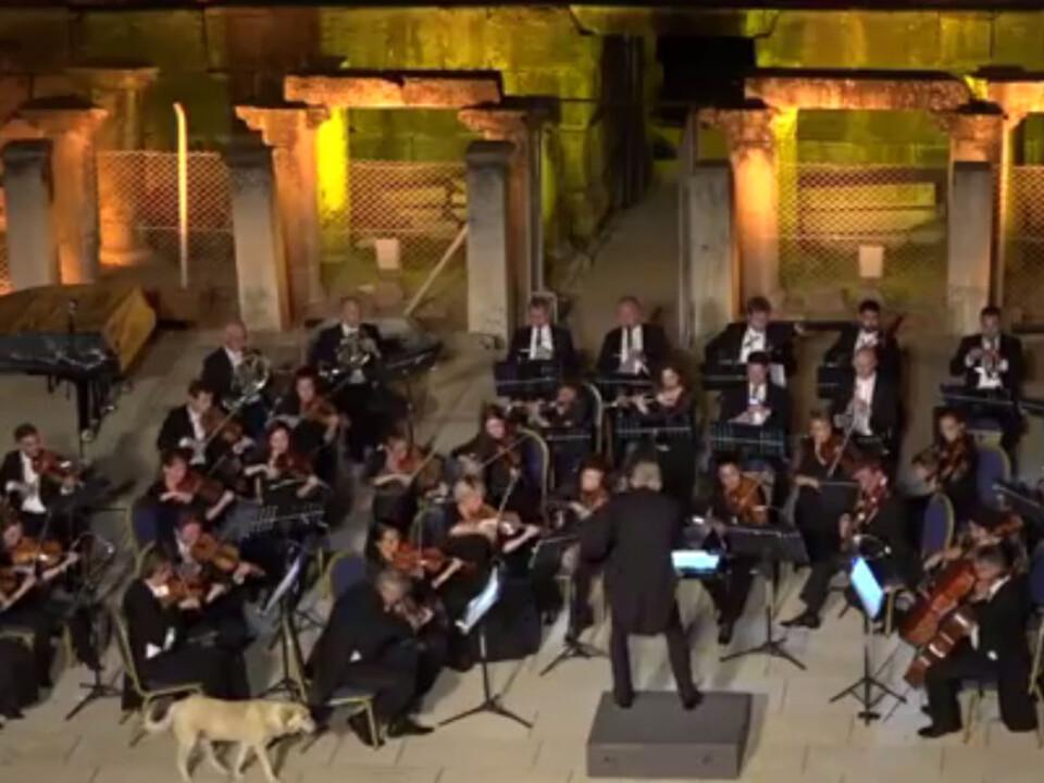 Hund als Konzertbesucher