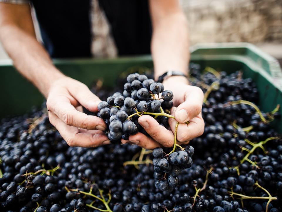 Kellerei Kurtatsch Bordeaux
