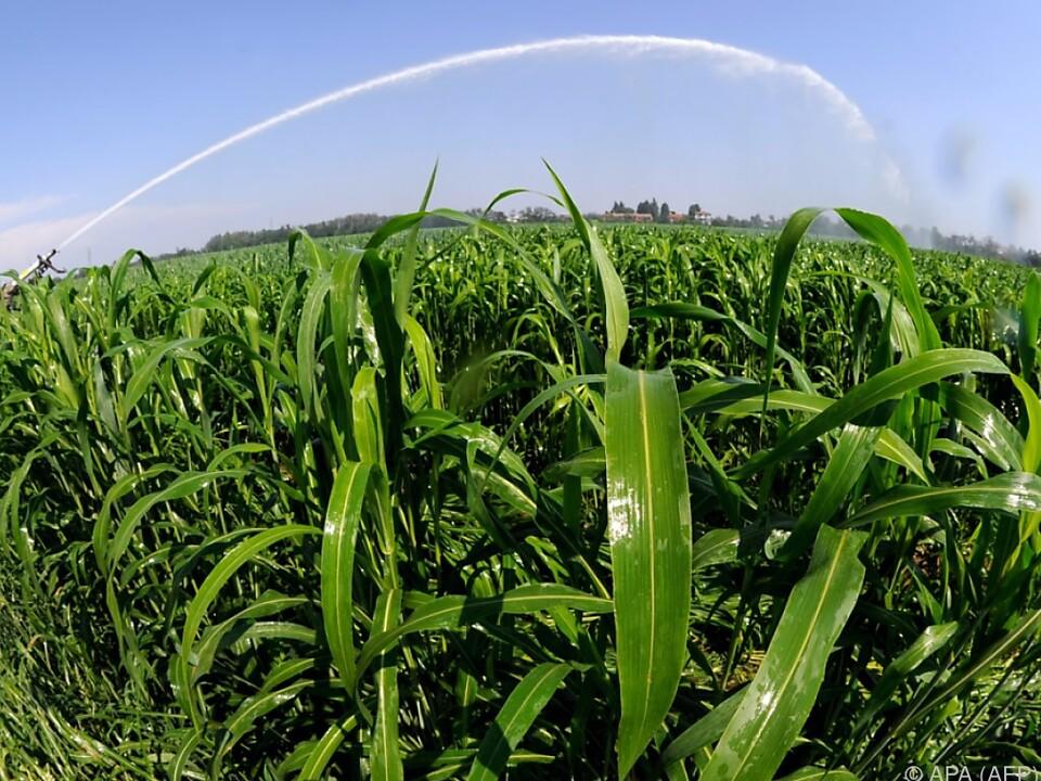 Bauernhöfe im ganzen Land wurden untersucht