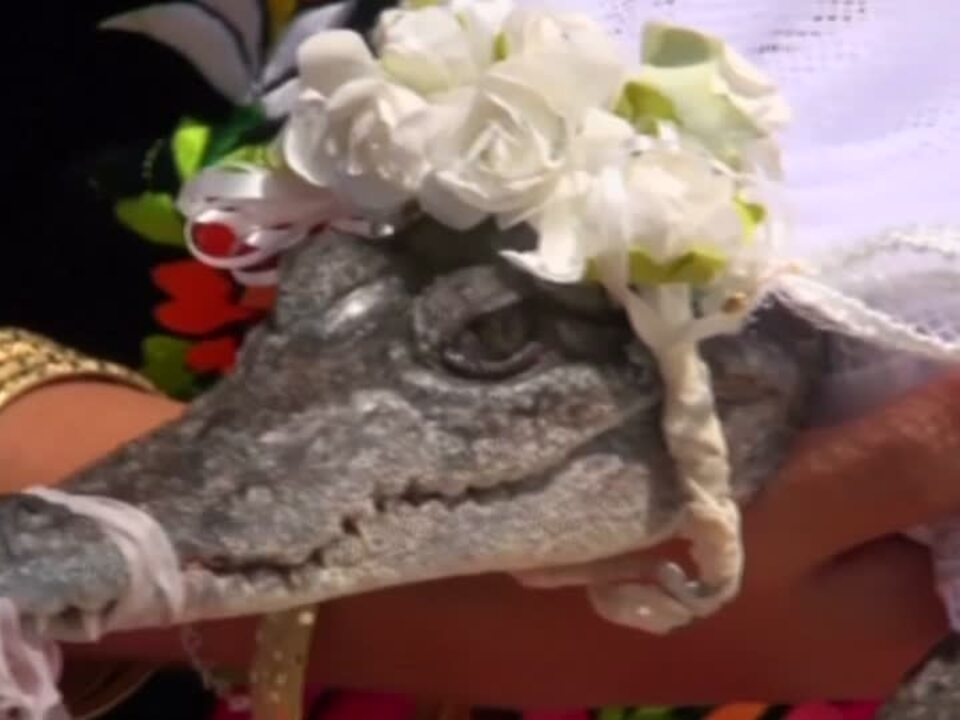 Bürgermeister heiratet Krokodil