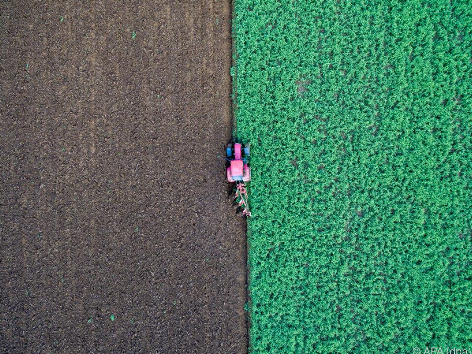 Der Bio-Anbau verzeichnet Zuwächse