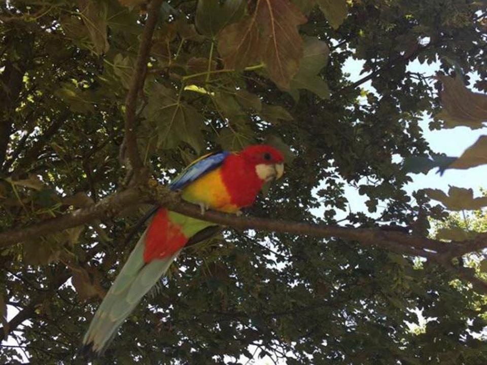 fb-christine-neumair-papagei-gais
