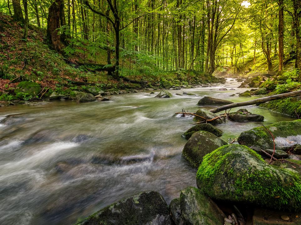 Bach Wald Fluss