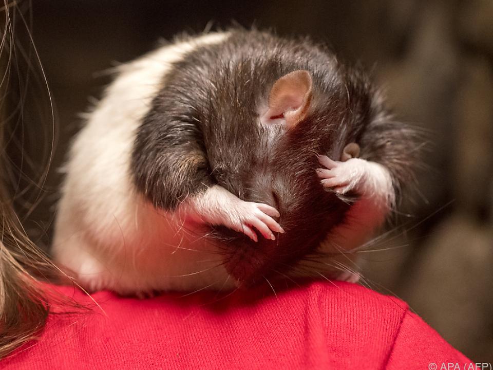 Frühstücken unter Ratten im San Francisco Dungeon