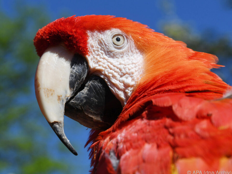 Mann lieferte sich kuriosen Streit mit Papagei