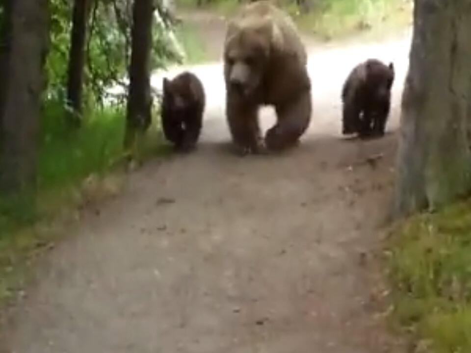 Wandern mit Grizzlys