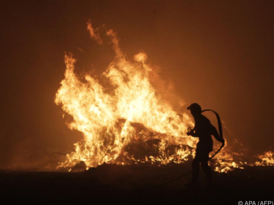 Die Brände zerstörten bereits mehr als 2.000 Hektar Land