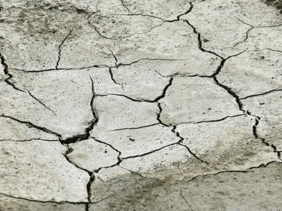 Hitze macht der Landwirtschaft zu schaffen