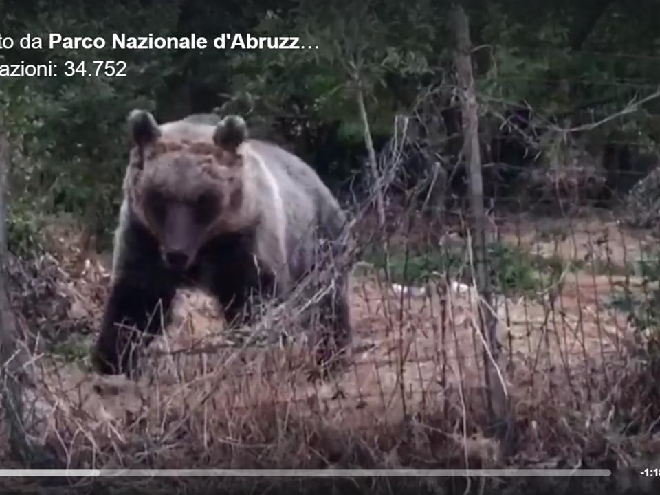 Facebook/Parco Nazionale d\'Abruzzo Lazio e Molise