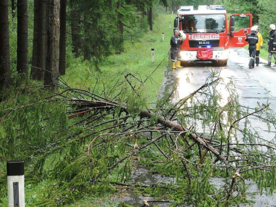 Zahlreiche Bäume fielen dem Sturm zum Opfer
