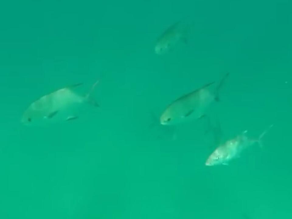 20170904_unterwasserflugzeug