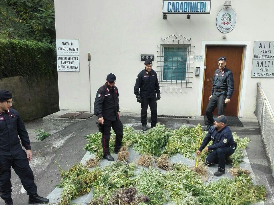 20170929-la-piantagione-di-marijuana-di-cornedo-estirpata-dai-carabinieri