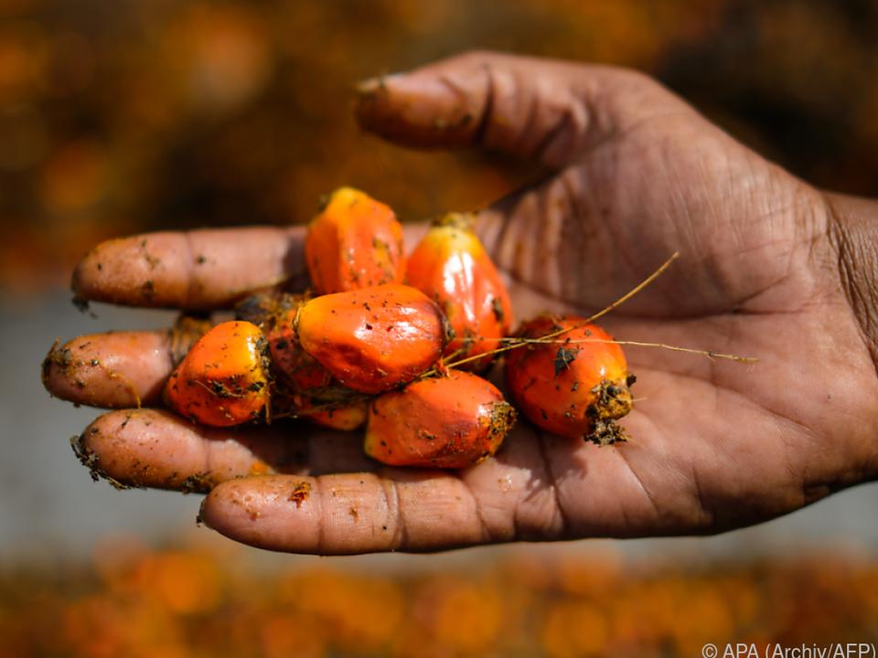 Aus diesen Früchten wird Palmöl gewonnen
