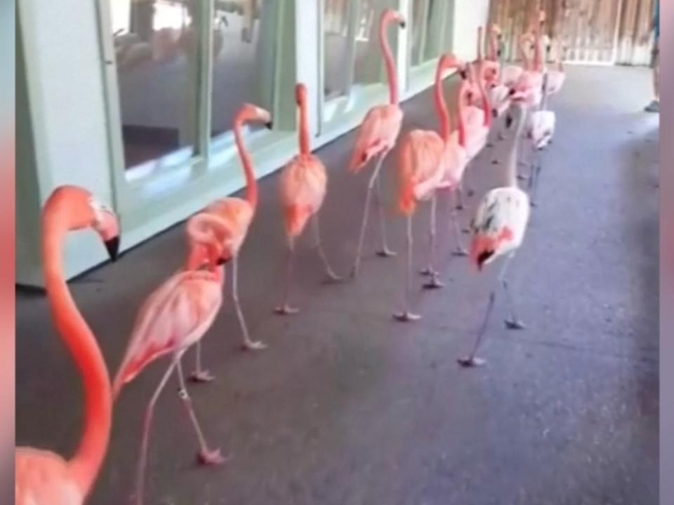 Flüchtende Flamingos und dramatische Bootsrettung: \