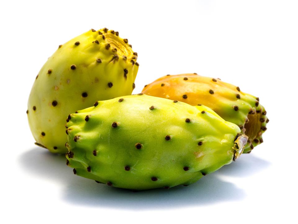 Kaktusfeige Kaktusfeigen isoliert freigestellt auf weien Hintergrund, Freisteller