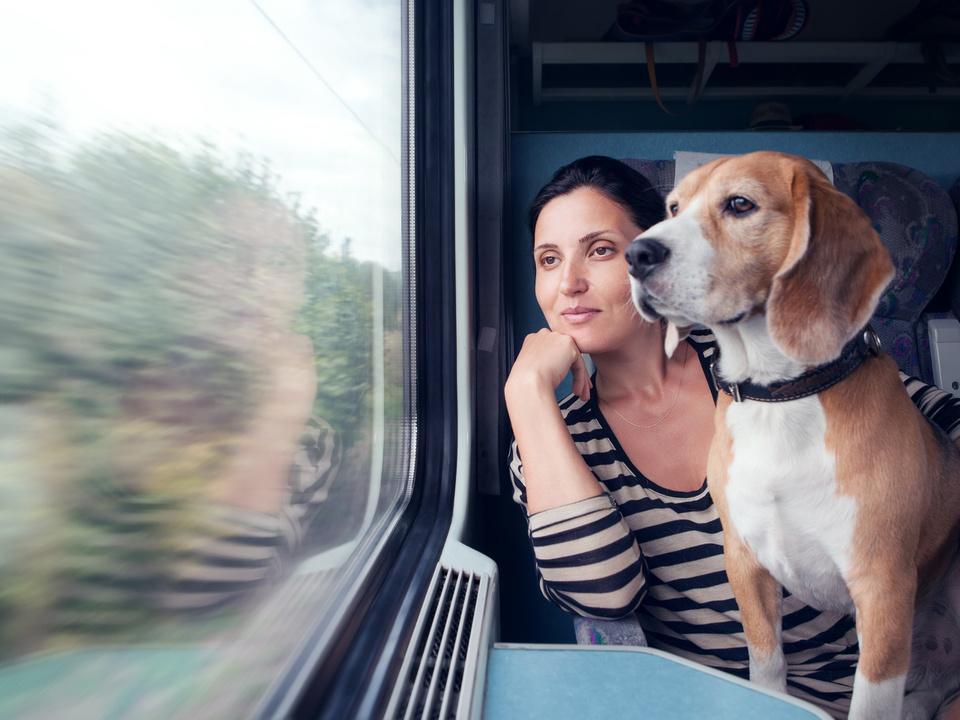 Zug Frau Hund entspannt