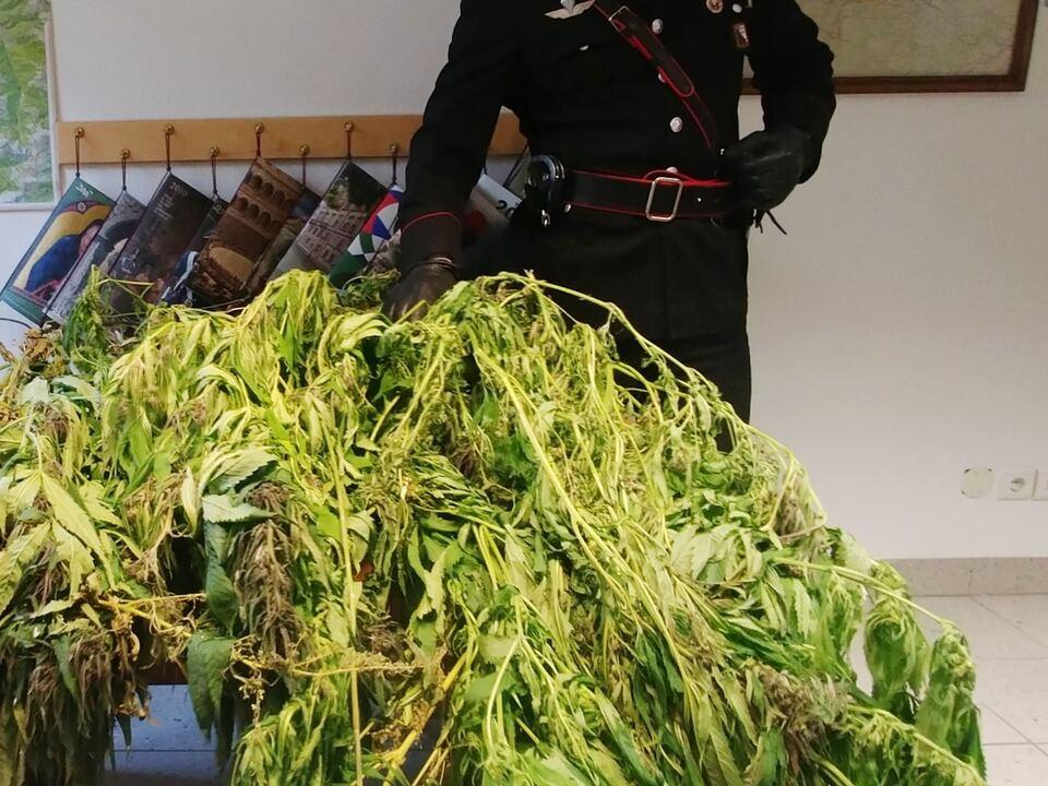 20171010-la-marijuana-sequestrata-dai-carabinieri-di-vandoies