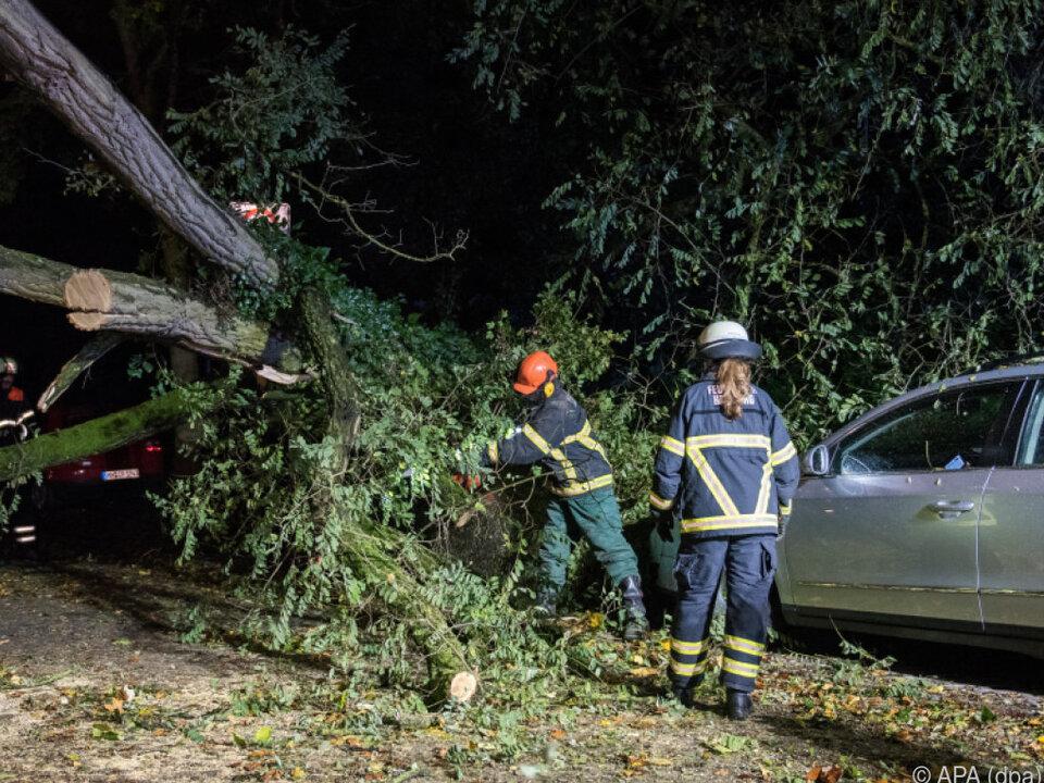 Feuerwehr befreite kaputte Autos von umgestürzten Bäumen