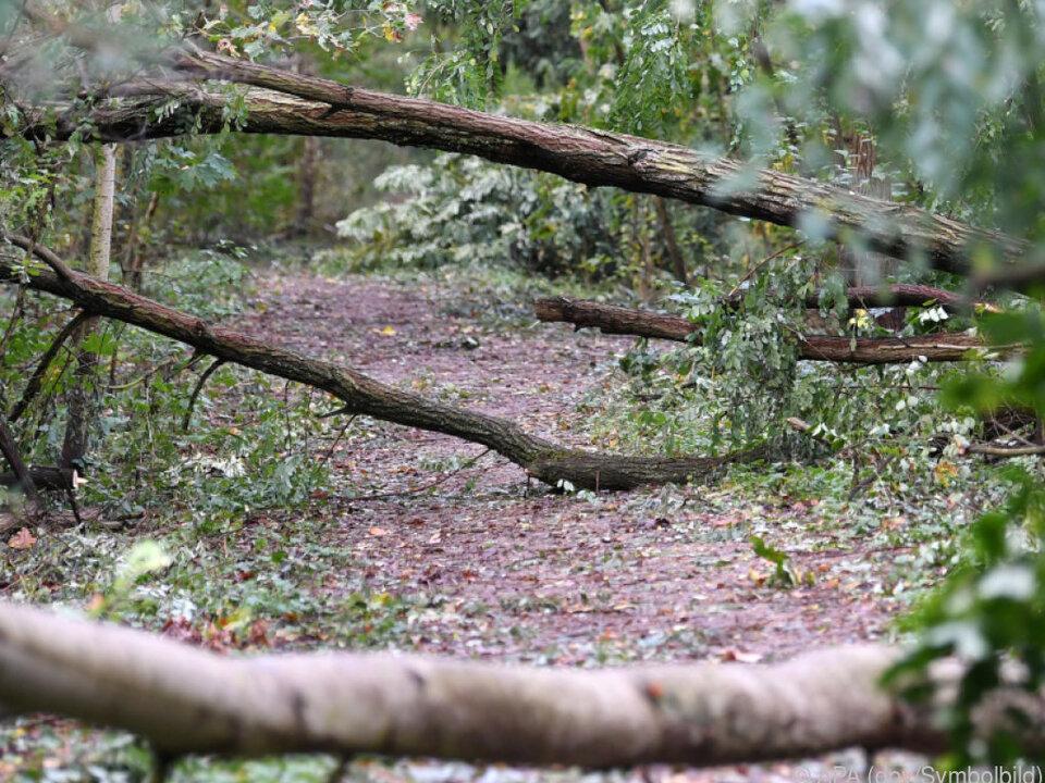 Gefahr durch umstürzende Bäume