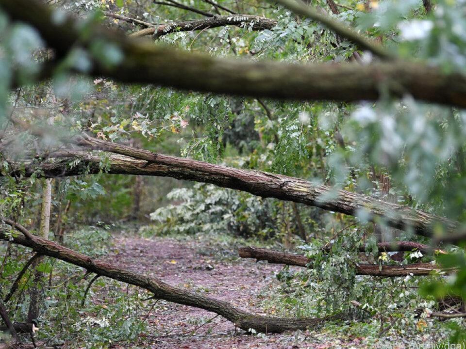Im Wald und unter Bäumen herrscht Lebensgefahr