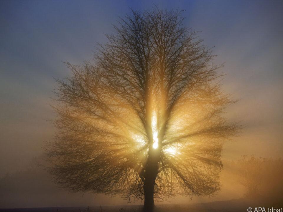 Sonnenschein und Nebelfelder könnten sich mischen herbst baum sonne nebel