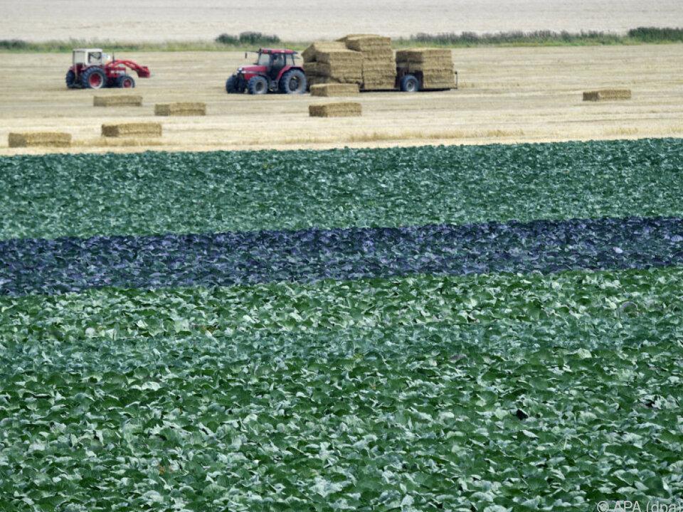 Bei der Getreideproduktion gab es einen deutlichen Rückgang bauer landwirt