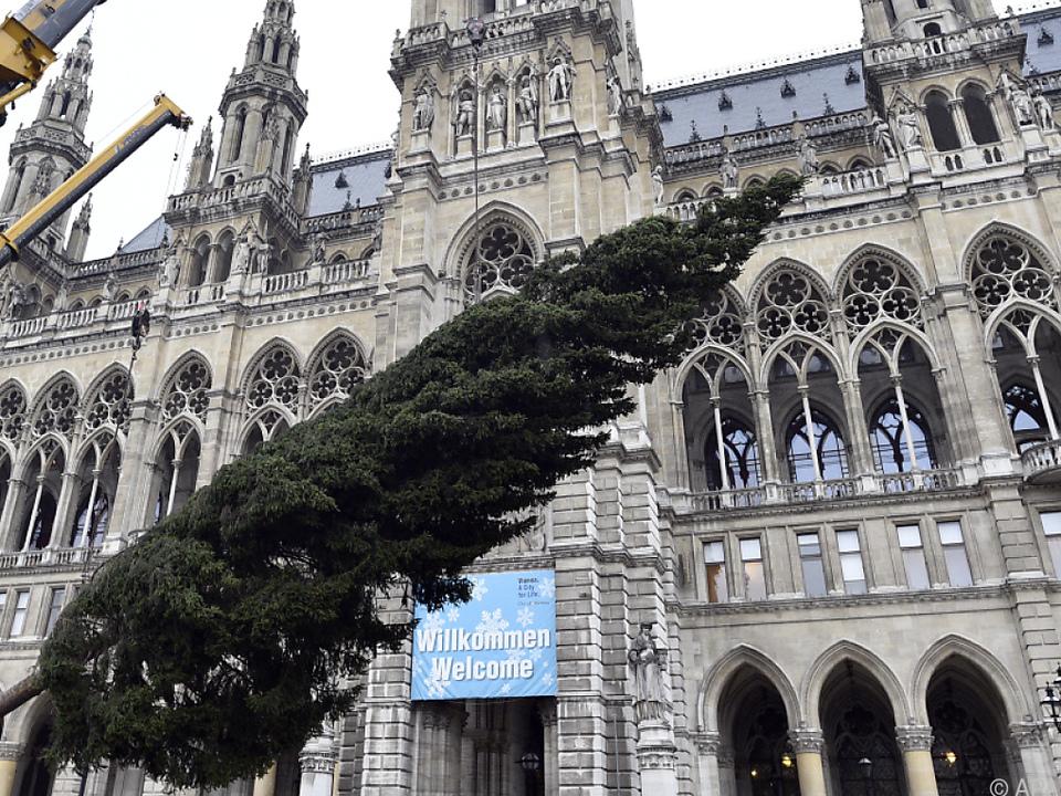 Die 25 Meter hohe Fichte stammt aus Vorarlberg