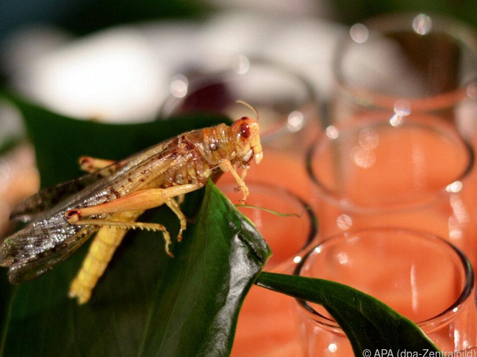 Insekten enthalten u.a. gute Fettsäuren und Kalzium