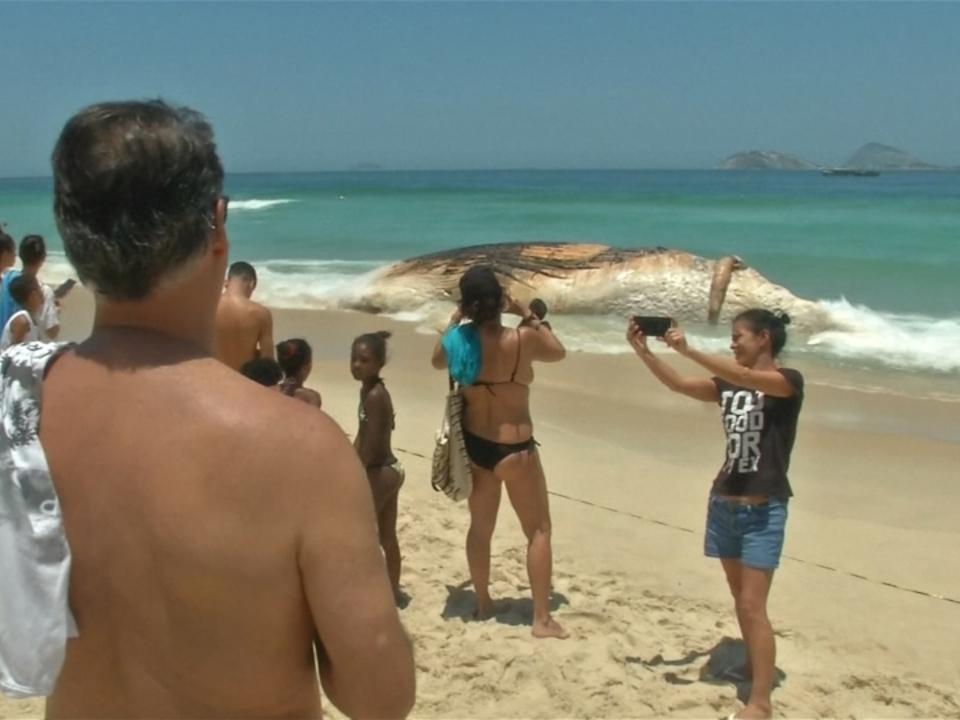 Toter Wal am Strand von Rio