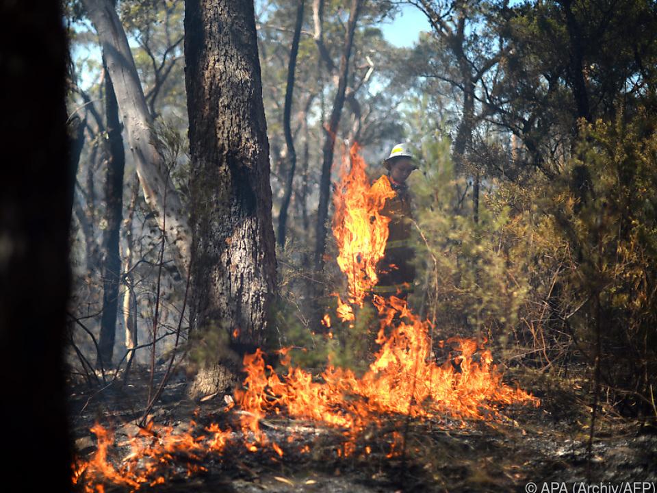 Buschfeuer konnte letztlich gelöscht werden