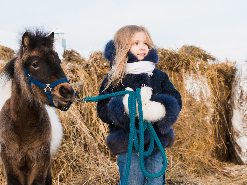 Pony Winter Small girl and small horse in a winter
