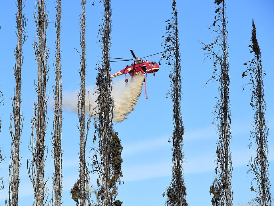 Löschflugzeug über verbrannten Bäumen